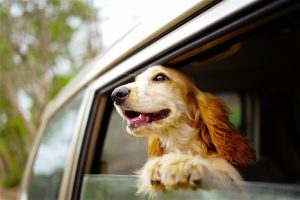 Good Doggie opiniones, foro, comentarios